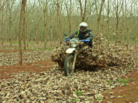 vietnam-motorcycle-tour-to-highlands-and-southern-coast